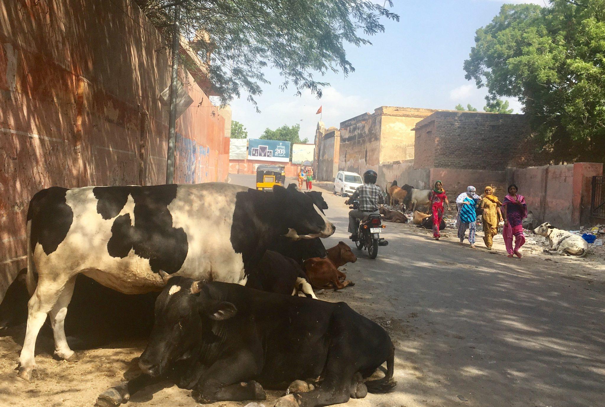 Bikaner e il Karni Mata, l'incredibile tempio dei topi
