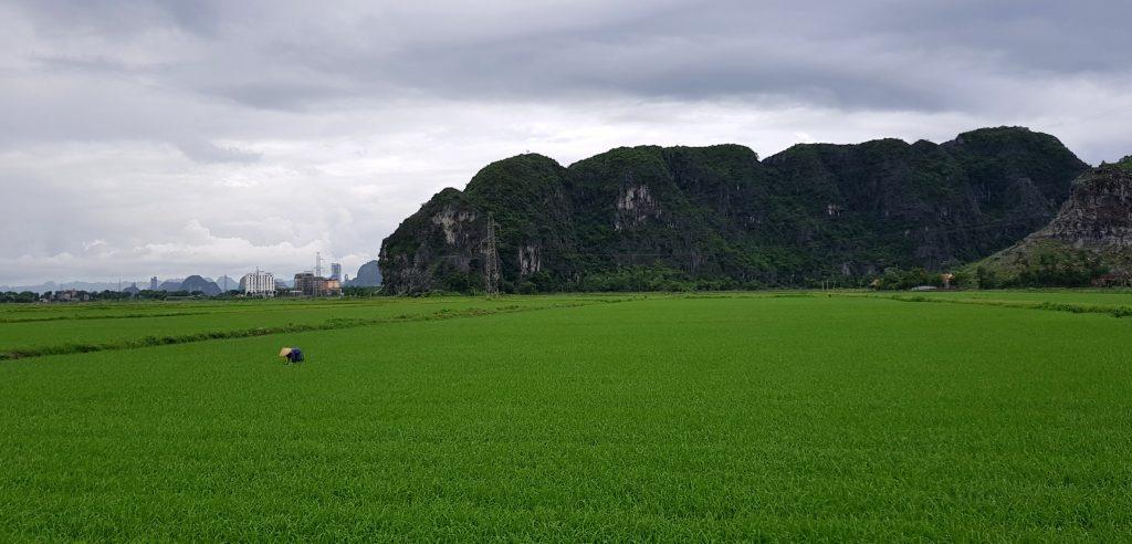 Le risaie della provincia di Ninh Binh