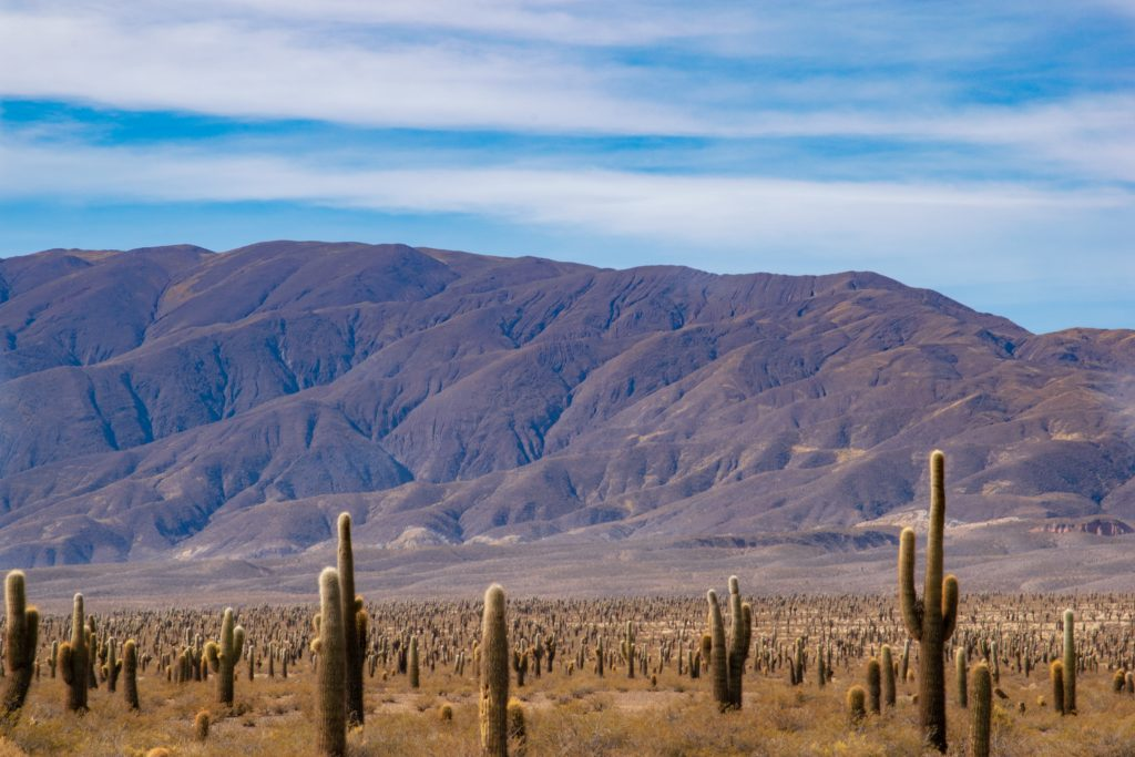 Parco Nazionale Los Cardones