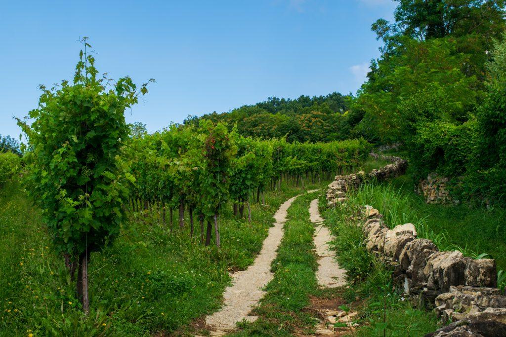 Cammino del Vescovado
