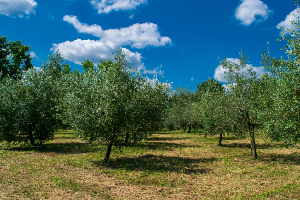 Oliveto, Cammino del Vescovado