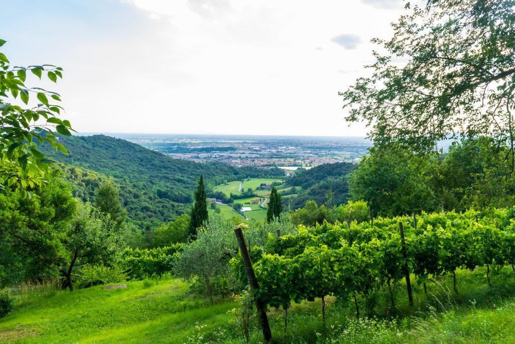 Tra le vigne di Scanzorosciate, Cammino del Vescovado