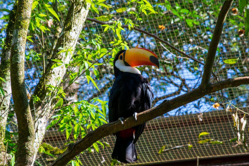Parques das Aves, Brasile